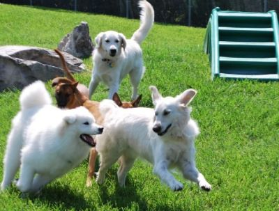 Doggy Day Care in Palm City