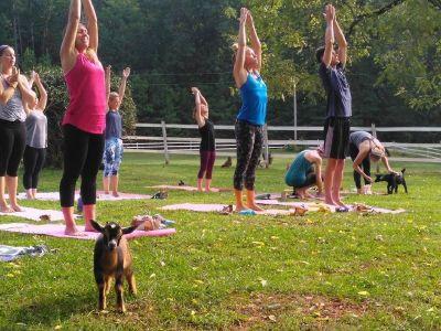 Goat Yoga instructor for Chapel Hill Farm