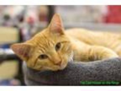 Adopt Briggs a Brown Tabby Domestic Shorthair cat in Fresno, CA (25283492)