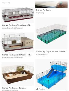 ISO GUINEA PIG CAGE AND ACCESSORIES!