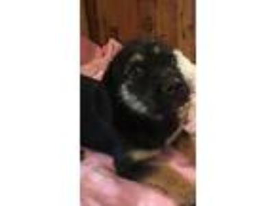 Adopt Villie a Terrier, Mixed Breed