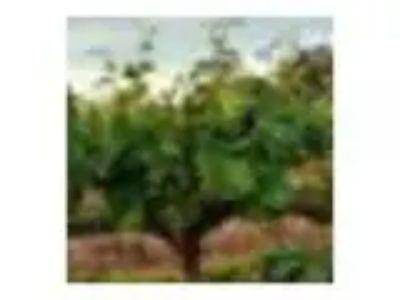Oak Farm Vineyards - Summer Wine Club Pick-up Party