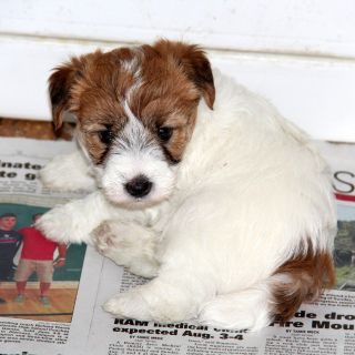 Animals And Pets For Adoption Classifieds In Denver