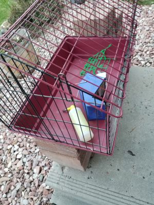 Guinea Pig Cage and Accesories