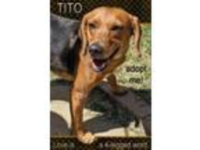 Adopt Tito a Hound (Unknown Type) / Beagle / Mixed dog in Charlottesville