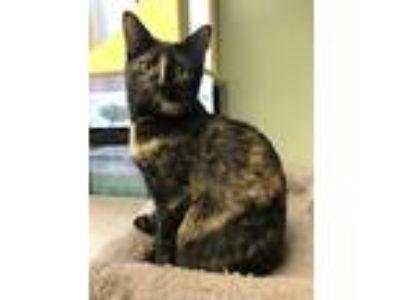 Adopt Roxie a Tortoiseshell Domestic Shorthair (short coat) cat in Lake Charles