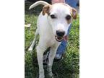 Adopt Abbott a White - with Black Terrier (Unknown Type, Medium) dog in Fort