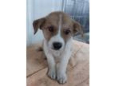 Adopt Eden in KY a Mixed Breed