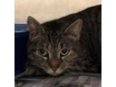 Adopt feralwild1902073063 a Domestic Short Hair
