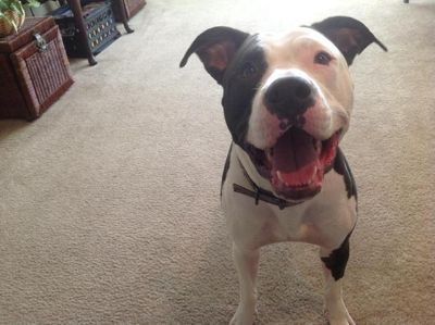 Free 1 12 Male Dog Full Blooded Not neutered