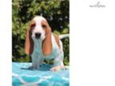 DANIEL Adorable Basset Boy Euro lines READY