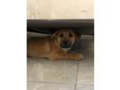 Adopt Lexa a Mixed Breed