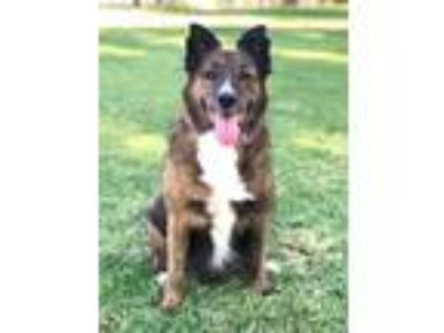 Adopt Princess Keona a Collie / Mixed dog in Rancho Santa Margarita