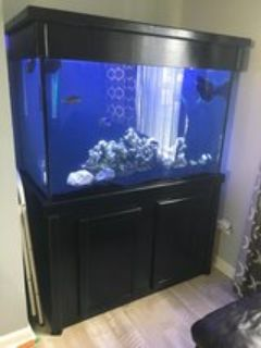 150 gallon tank, canopy, stand and more
