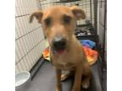 Adopt creasy a Terrier (Unknown Type, Medium) dog in League City, TX (25852898)