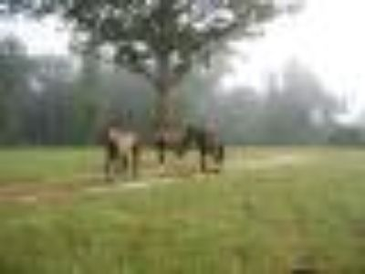 Horse Boarding/Care/Riding LEESVILLE/FORTPOLK