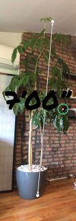 Amazing indoor outdoor Plant!