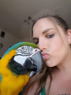 Aasfdfgh Male and Female Blue and Gold Macaw Parrots for sale