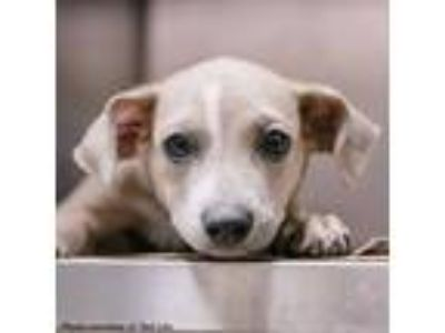 Adopt Mouse a Mixed Breed