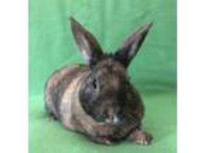 Adopt Finch a Bunny Rabbit