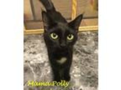 Adopt Polly a Black (Mostly) Domestic Shorthair (short coat) cat in Chisholm