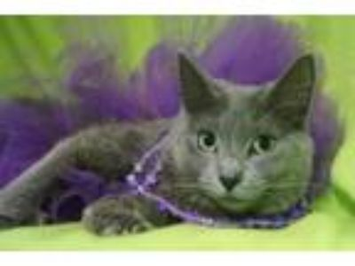Adopt Lupe a Domestic Long Hair