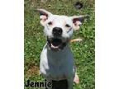 Adopt Jennie a Pit Bull Terrier / Mixed dog in Gautier, MS (25223048)
