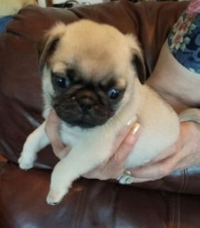 Craigslist Animals And Pets For Adoption Classifieds In Victoria