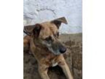 Adopt Ava a Mountain Cur