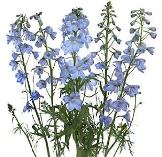 Wholesale Delphinium Flower