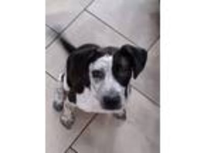 Adopt Mckenzie a Pointer