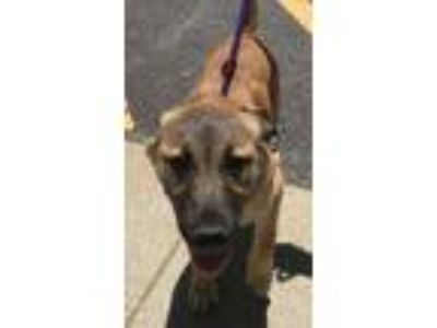 Adopt Jayda a German Shepherd Dog