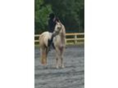 Cute AllAround QH mare looking for her partner