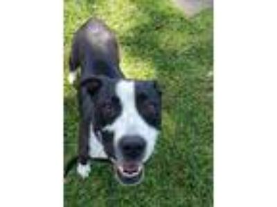 Adopt Janet a Black Terrier (Unknown Type, Small) / Mixed dog in Honolulu