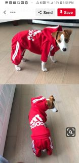 Dog track suit Adidog color is BLUE