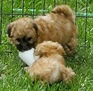 Puppies Dogs For Adoption Classifieds In Kuna Idaho