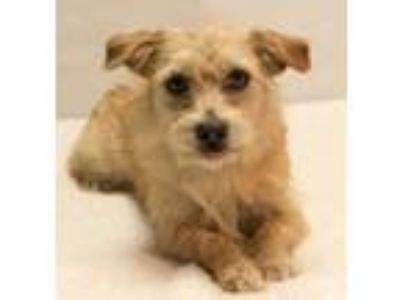 Adopt Carly a Terrier