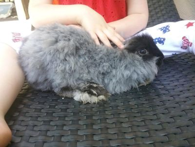 Fluffy bunny looking it's forever home!