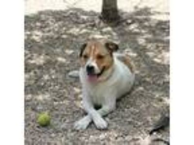 Adopt Hercules a Mixed Breed