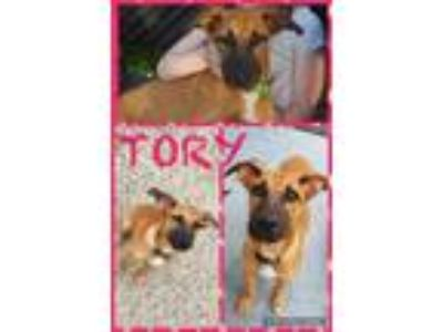 Adopt Tory a Tan/Yellow/Fawn - with Black German Shepherd Dog / Labrador