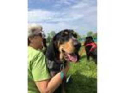 Adopt Amos a Black Hound (Unknown Type) / Mixed dog in Gettysburg, PA (25295303)