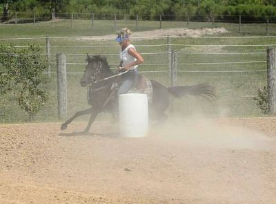 Professional Horse Training Get it done right the first time...  (Crowley, la)