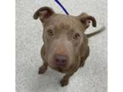 Adopt Marla a Tan/Yellow/Fawn Mixed Breed (Medium) dog in Jacksonville