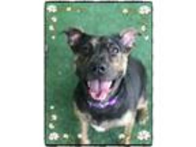 Adopt GAYLA - see video a Black - with Brown, Red, Golden