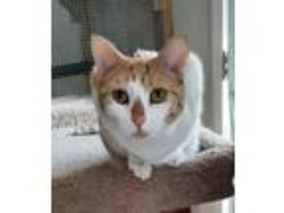Adopt Peaches and her babies a Domestic Short Hair