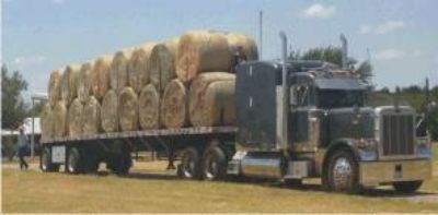 Premium Hay by the Truckload (Lytle, Tx)