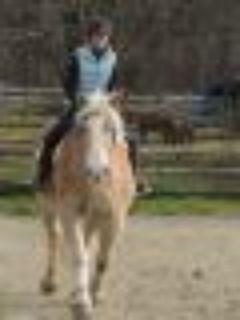 Baron Draft Horse
