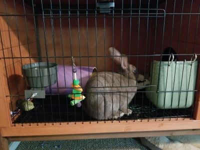 Bunny cage with Friendly bunny