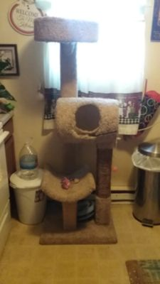 Very large cat tree.. has some wear on hole but easy fix this is about 6 foot tall 2 feet wide. Lots of life left.. pick up in Lake City