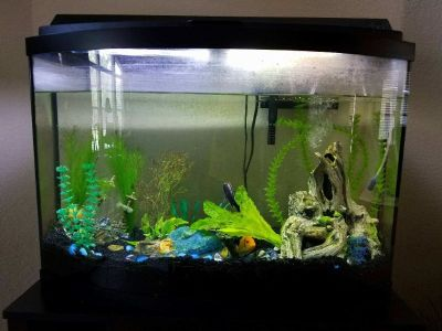 FISH TANK & STAND, Pumps, & Decorations (1 parrot fish)